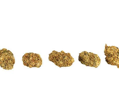 Fleurs cannabis light Orange bud