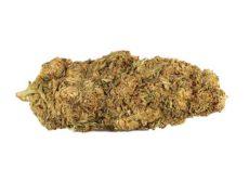 mango-haze-fleur-de-cannabis
