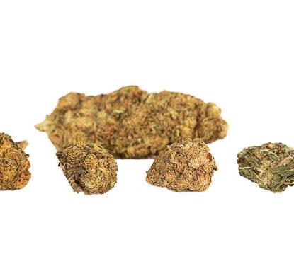 fleurs de cannabis CBD Mango Haze