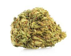 fleur de Mango Haze canabis légal