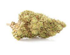Fleurs CBD de la variété Orange Bud