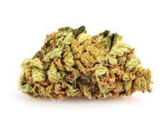 fleur de cannabis cbd sweet berry