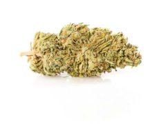 melon kush cbd fleur plante de cannabis