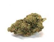 Bubblegum-fleur-de-cannabis-cbd-marijuana-france