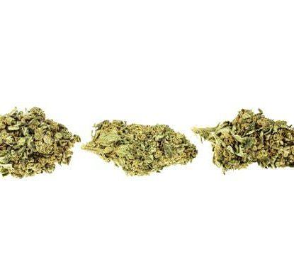 Bubblegum Fleur de Cannabis CBD