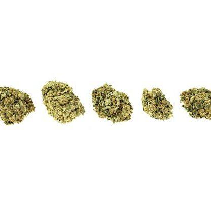 Bubblegum Fleur de CBD Marijuana