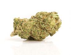 Gorilla Glue CBD Fleur