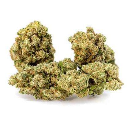 gorilla-glue-cbd-shop-france-cannabis-sativa