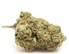 do-si-dos-fleur-de-cannabis-cbd-france