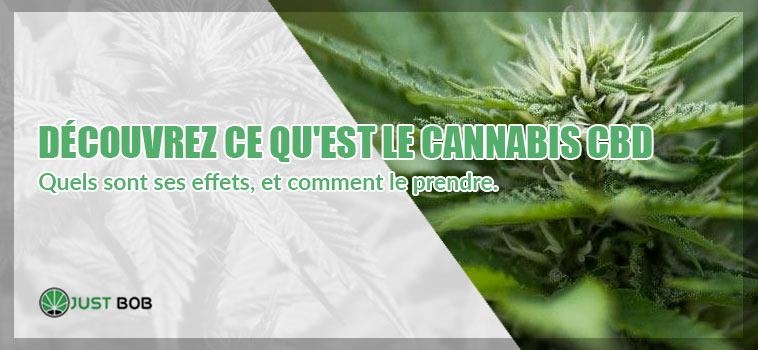 Qu'est-ce que le cannabis CBD du cannabis et quels sont ses effets