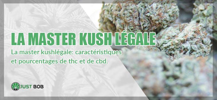 la master kushlégale: caractéristiques et pourcentages de thc et de cbd.