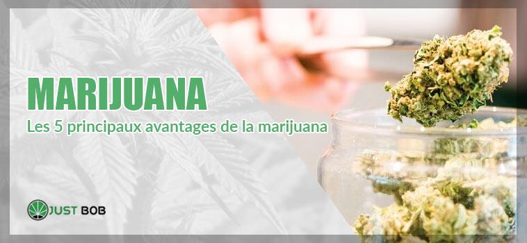 Les 5 principaux avantages de la marijuana