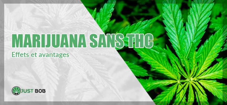 Effets at avantages de la Marijuana sans THC