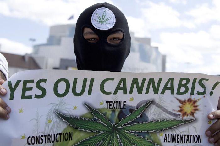 Le cannabis en France