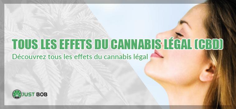 cannabis legal effets