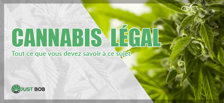 cannabis legal en france
