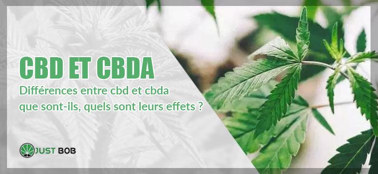 différences entre cbd et cbda / que sont-ils, quels sont leurs effets ?