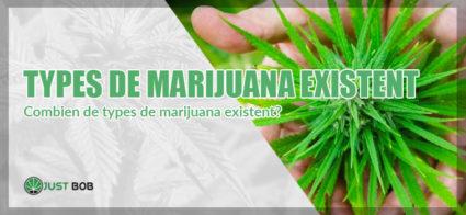combien de types de marijuana existent