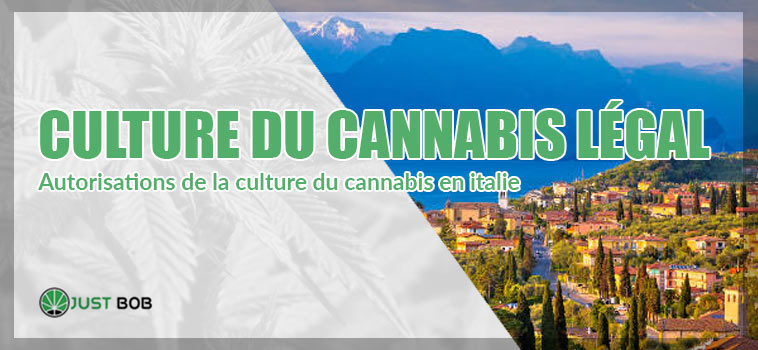 culture du cannabis legal in italie