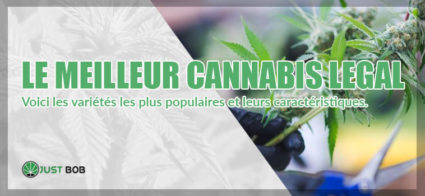 Les meilleures variétés de cannabis CBD