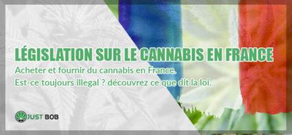 Acheter et fournir du cannabis en France. Est-ce toujours illegal ? découvrez ce que dit la loi.
