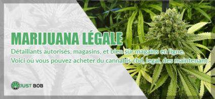 marijuana légale : voici où l'acheter