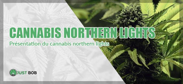 présentation du cannabis northern lights