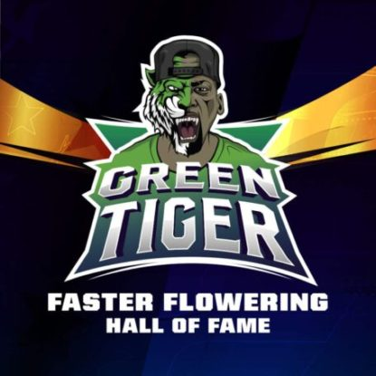 green-tiger-faster-flowering