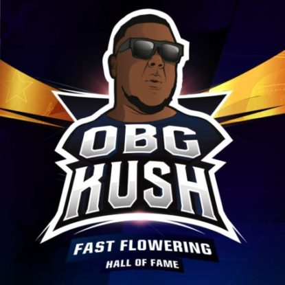 obg-kush-fast-flowering