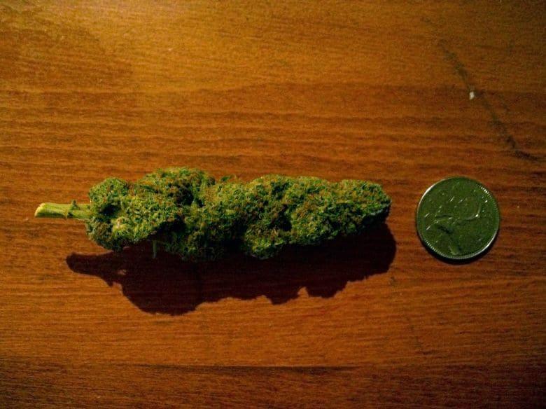 Cocotte_de_cannabis-edit