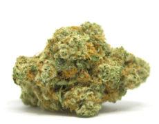 gorilla-glue-fleur-cbd