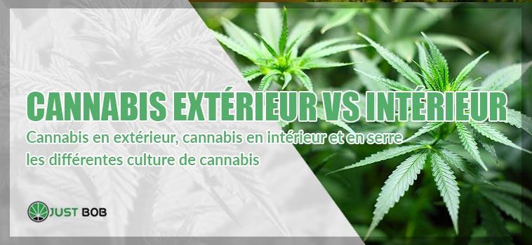 cannabis extérieur vs intérieur