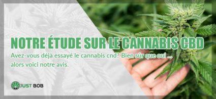 étude sur le Cannabis CBD