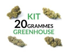 Kit 20 grammes Greenhouse justbob.fr