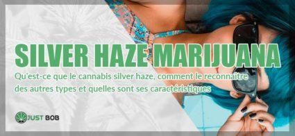 silver haze marijuana 3