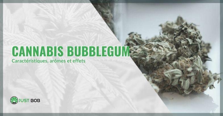 Les effets et les caractéristiques du bubblegum cannabis