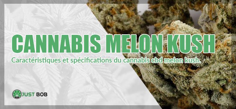 Caractéristiques cannabis melon kush