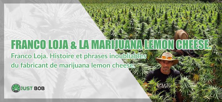 Franco Loja marijuana lemon cheese Histoire