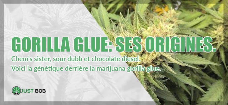 gorilla glue ses origines