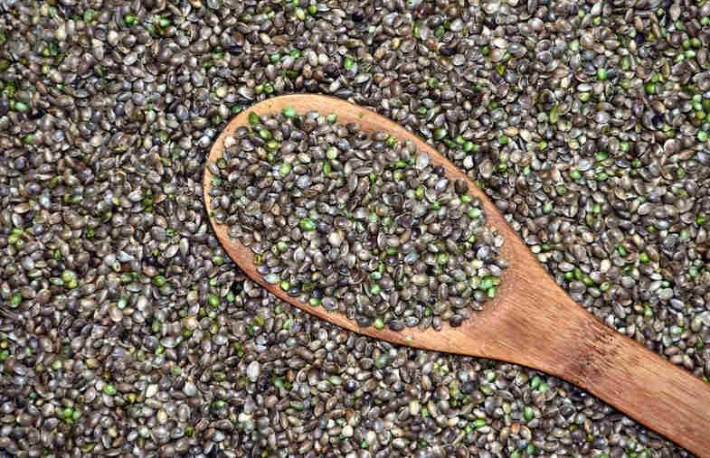 banque de semences
