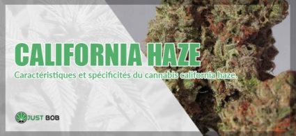 cannabis california haze de la baie