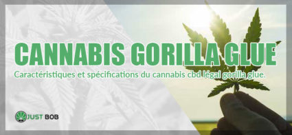 cannabis gorilla glue