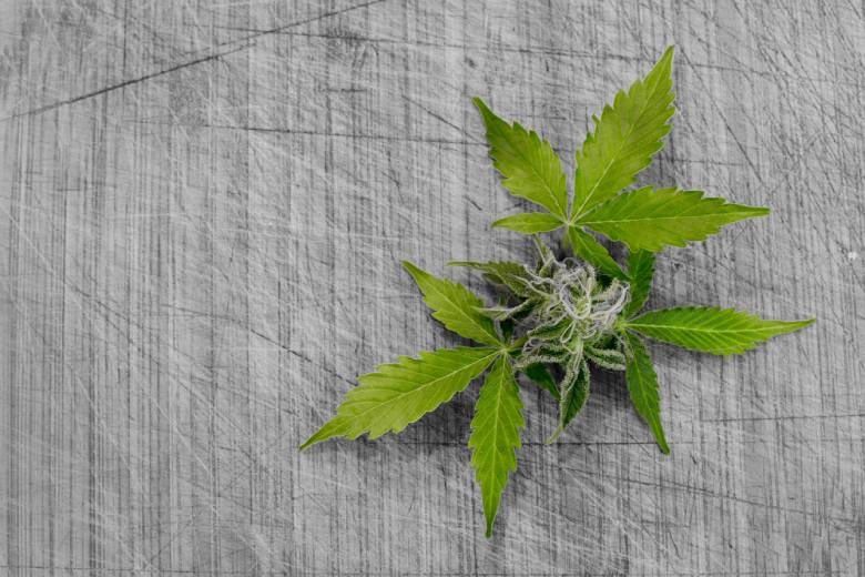 cbd, thc et effets marijuana cerveau