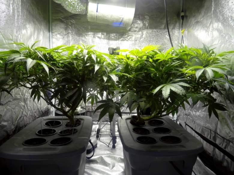 livres sur la marijuana CBD et sa culture