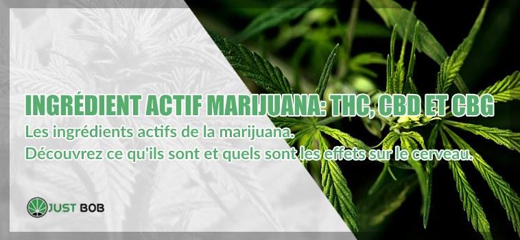 Ingrédient actif marijuana THC CBD CBG