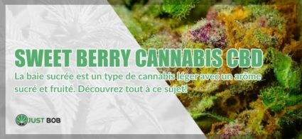 Sweet Berry cannabis CBD