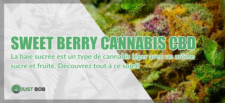 Sweet Berry cannabis CBD