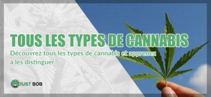 Tous les types de cannabis legere