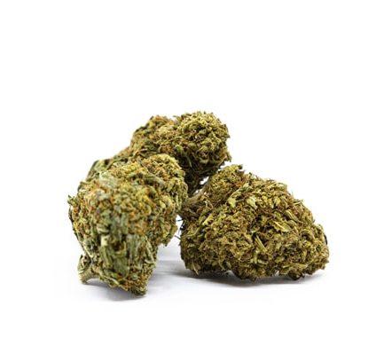 bud orange plante du marijuana