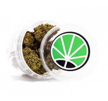 pot de marijuana légal Master Kush